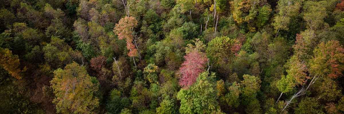 Image of bird's-eye view of trees
